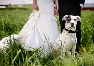 家族の一員!ペットと結婚式を楽しむ方法